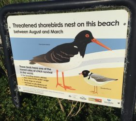 Threatened shorebirds