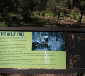 Ned Kelly Tree, Stringybark Creek