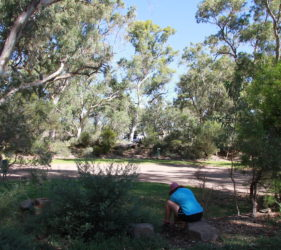 Showing the large area of campsites at Spear Creek Caravan Park (our camp in background)