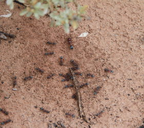 Large ants at our campsite enjoying the rain