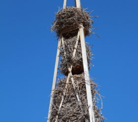 Multiple bird nests on an old Trig point on Cook Road