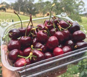 Local cherries from Kenton Valley Cherry Farm