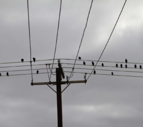 Birds composing their next song at Middleton Beach