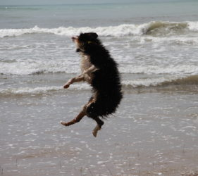 Rachel's dog Hugo doing flips on Middleton Beach